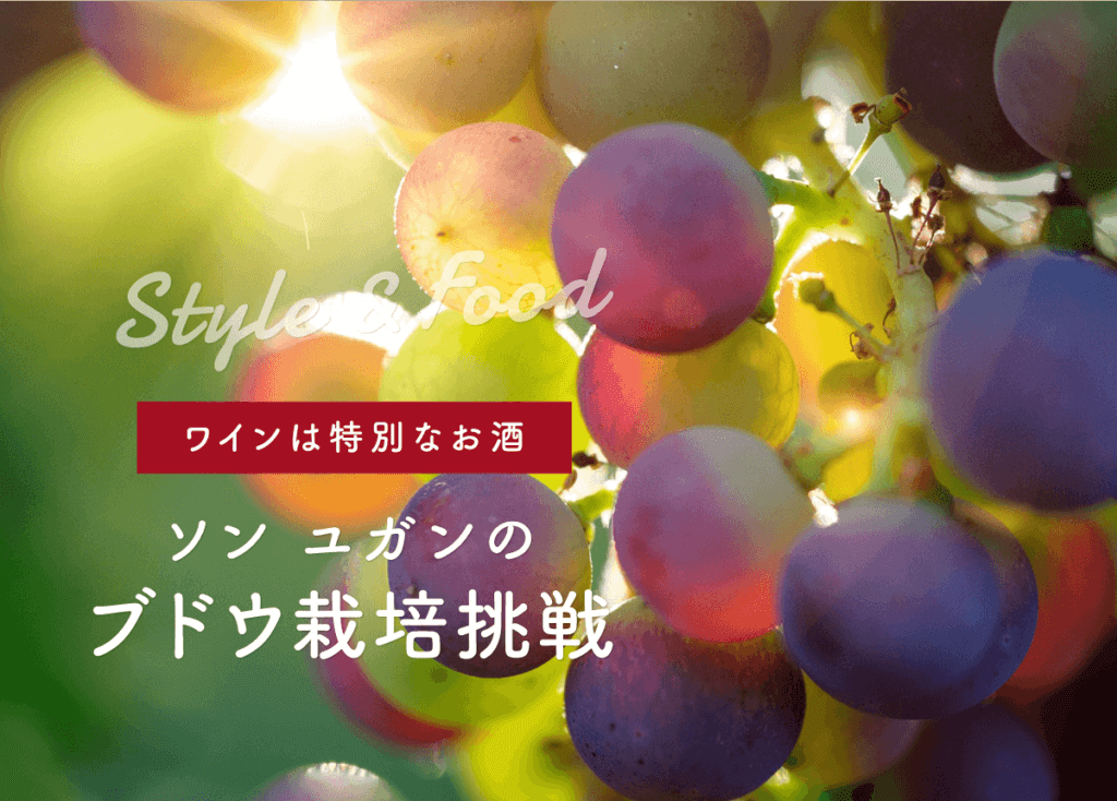 【ワインは特別なお酒】ソン ユガンのブドウ栽培挑戦への始まり