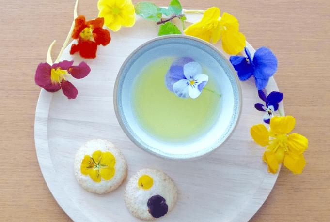 【満木葉子の日本茶完全攻略法vol.1】そもそも日本茶ってなに?