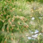 【満木葉子の日本茶完全攻略法vol.2】花粉症の人におすすめしたい日本茶