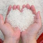 【お米の婚活事情】ひとめぼれから生まれた様々なお米たち