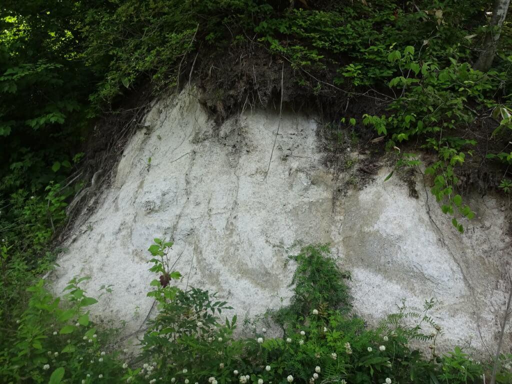 浅川ダムの土壌