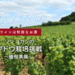 【ワインは特別なお酒】ソンユガンのブドウ栽培挑戦〜植樹準備〜