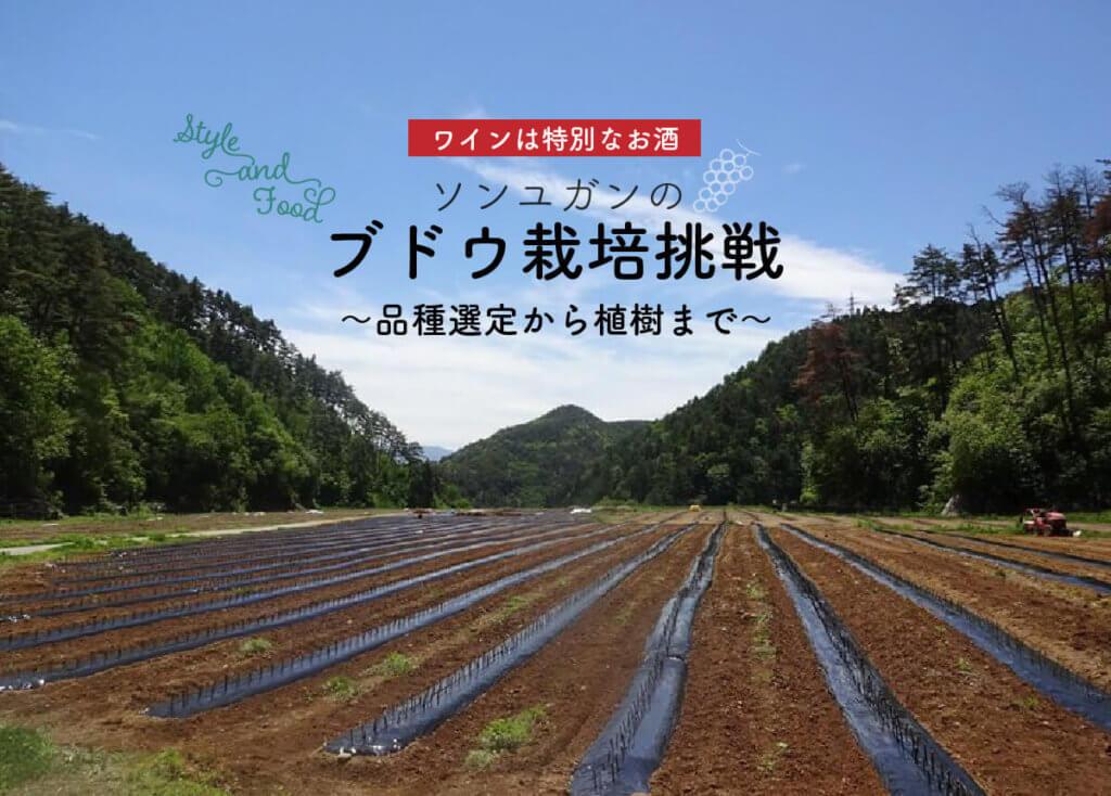 【ワインは特別なお酒】ソンユガンのブドウ栽培挑戦~品種選定から植樹まで〜