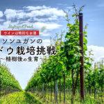 【ワインは特別なお酒】ソンユガンのブドウ栽培挑戦~植樹後の生育〜