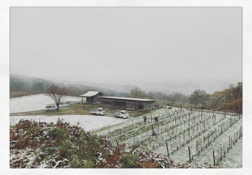 セイズファーム冬景色の様子