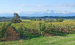 コロンバール種のブドウ産地・ジェールの大自然の様子