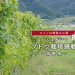 【ワインは特別なお酒】ソンユガンのブドウ栽培挑戦 ~病害虫〜