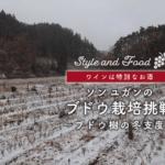 【ワインは特別なお酒】ソンユガンのブドウ栽培挑戦~ブドウ樹の冬支度〜