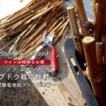 【ワインは特別なお酒】ソンユガンのブドウ栽培挑戦~試験栽培用ブドウ苗準備〜