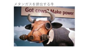 メタンガスを排出する牛