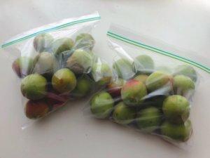 保存袋に梅を入れ、冷凍庫で凍らせる。