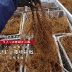 【ワインは特別なお酒】ソンユガンのブドウ栽培挑戦〜定植準備〜