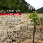 【ワインは特別なお酒】ソンユガンのブドウ栽培挑戦〜定植後〜