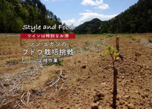【ワインは特別なお酒】ソンユガンのブドウ栽培挑戦〜定植作業〜