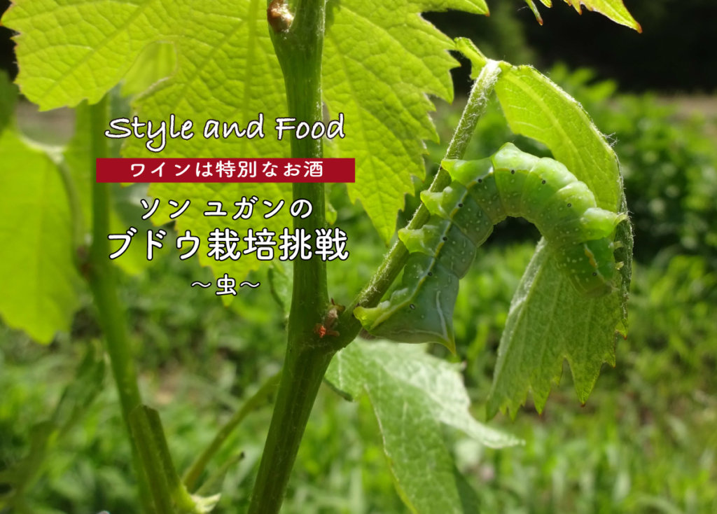 【ワインは特別なお酒】ソンユガンのブドウ栽培挑戦〜虫〜
