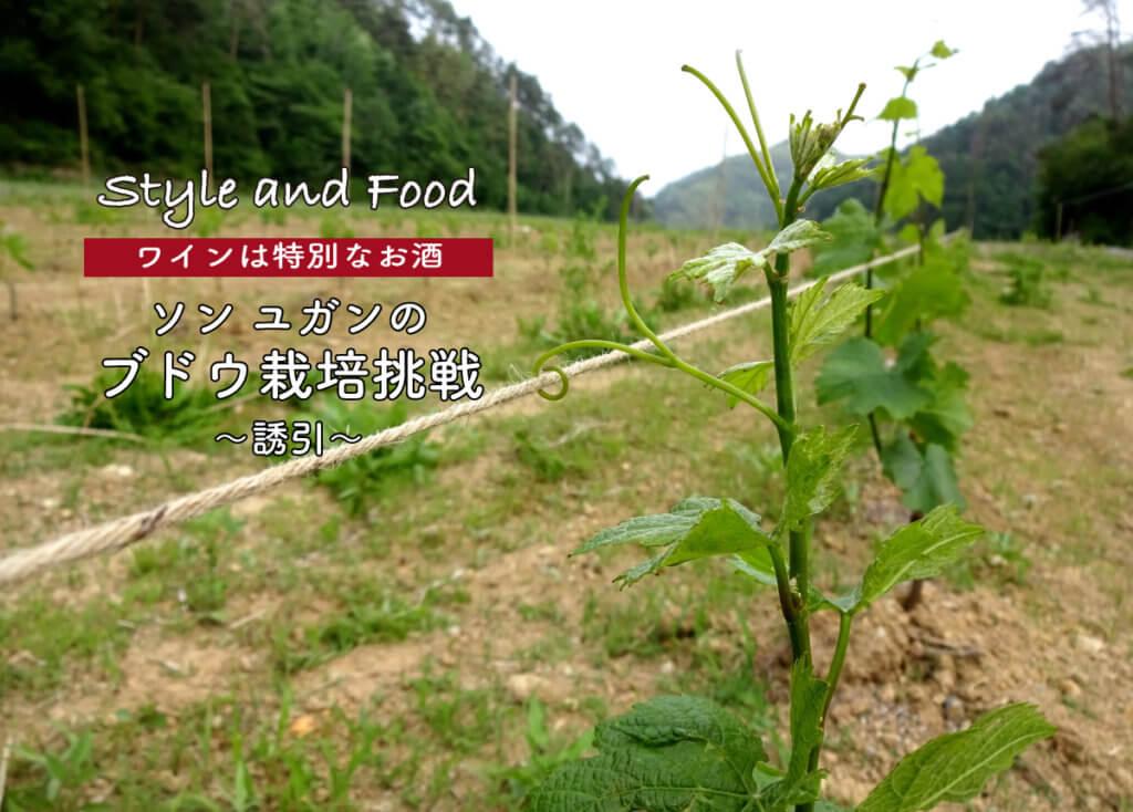 【ワインは特別なお酒】ソンユガンのブドウ栽培挑戦〜誘引〜