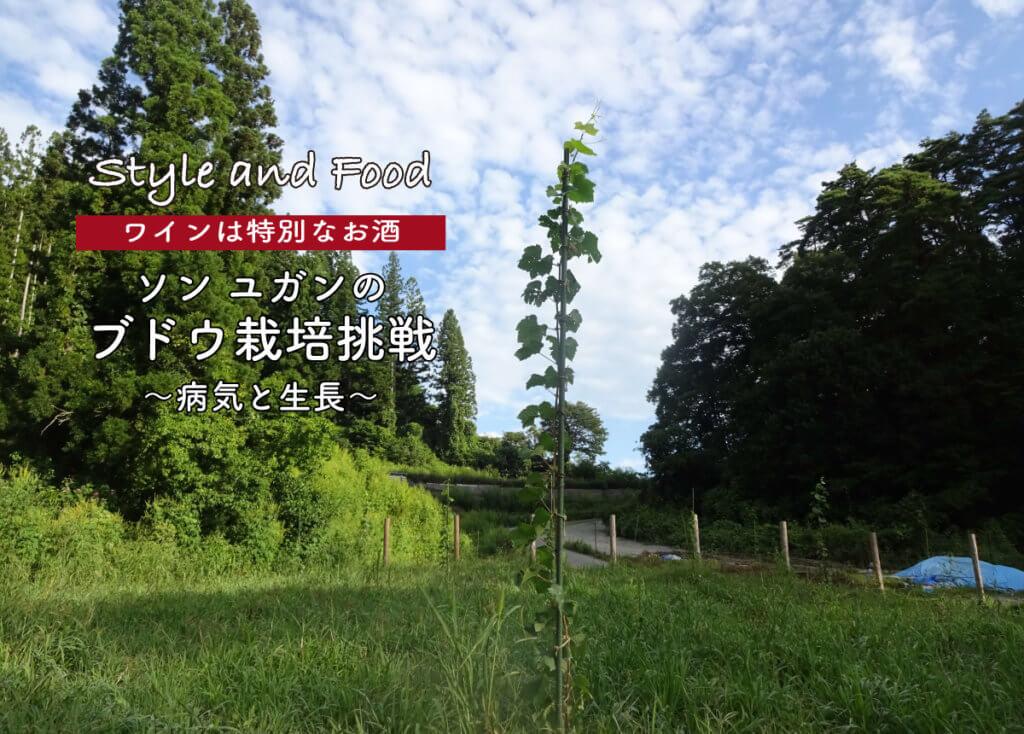 【ワインは特別なお酒】ソンユガンのブドウ栽培挑戦 〜病気と生長〜