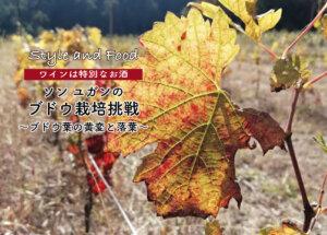 【ワインは特別なお酒】ソンユガンのブドウ栽培挑戦 〜ブドウ葉の黄変と落葉〜
