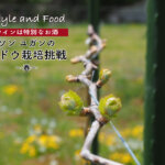 【ワインは特別なお酒】ソンユガンのブドウ栽培挑戦 〜春〜