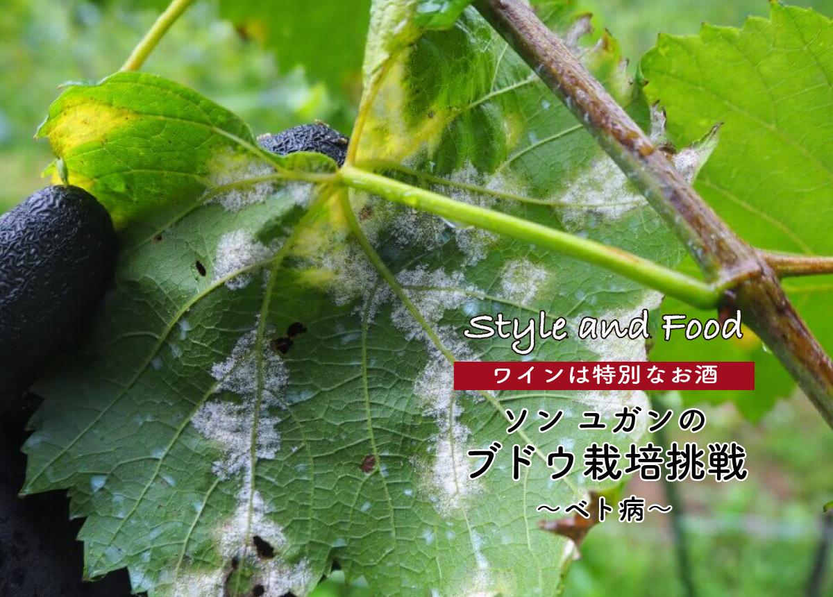 【ワインは特別なお酒】ソンユガンのブドウ栽培挑戦 〜ベト病〜