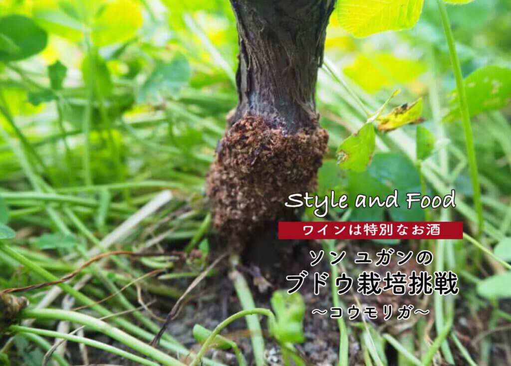 【ワインは特別なお酒】ソンユガンのブドウ栽培挑戦 〜コウモリガ〜