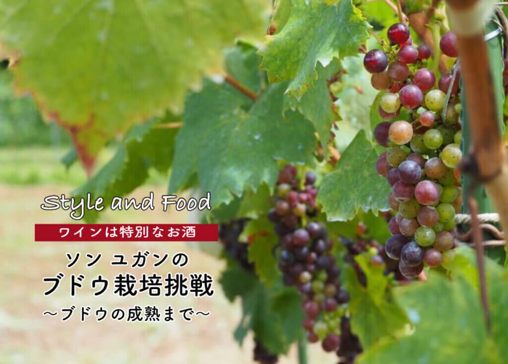【ワインは特別なお酒】ソンユガンのブドウ栽培挑戦 〜ブドウの成熟まで〜