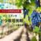 【ワインは特別なお酒】ソンユガンのブドウ栽培挑戦〜土壌改良〜